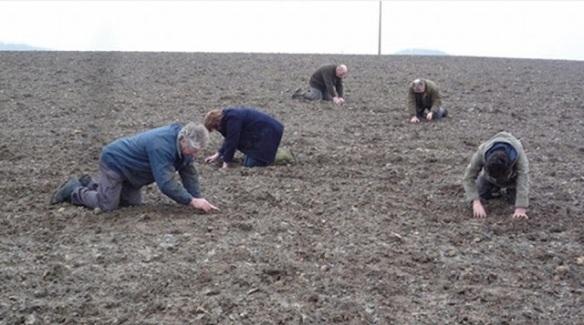 Szukają wiosny w polu.